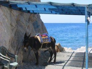 Esel Griechenland