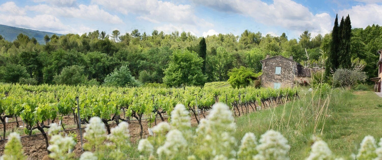 Blühende Weinberge in Frankreich
