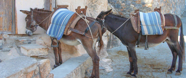 Esel als Transportmittel durch Lindos