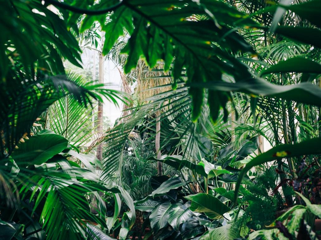 Palmentarium de Santa Cruz Teneriffa Botanischer Garten selterner Palmenarten_edited