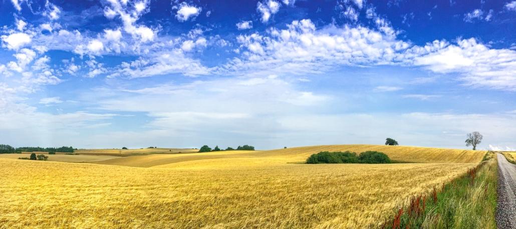 Weite Wiesenlandschaft im Feriengebiet Skåne in Schweden nahe der FKK Campingplätze