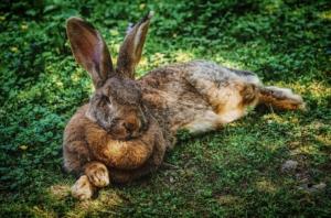 Kaninchen im viktoriapark