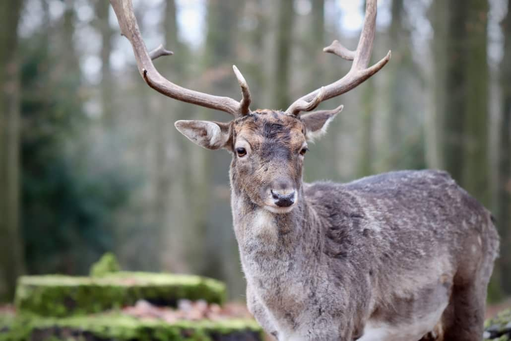 Die besten Wildparks in NRW